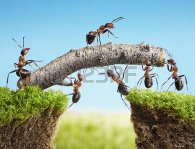 10355173-equipo-de-hormigas-construir-puente-con-registro-trabajo-en-equipo