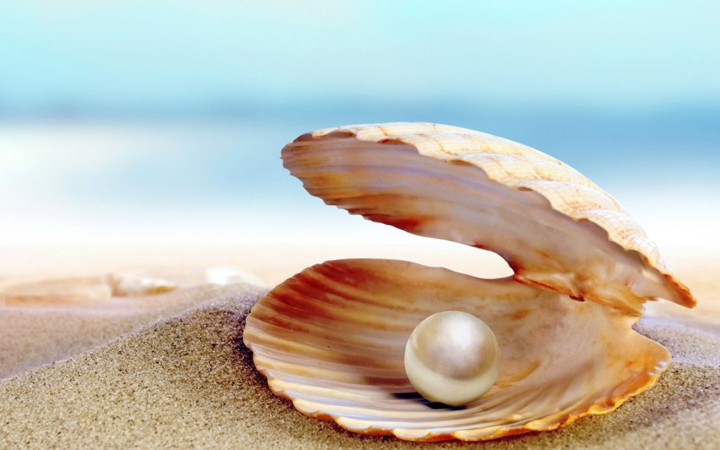 Seashell-Perl-Beach-Shore