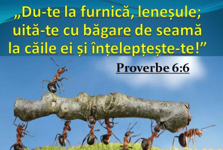 Verset - Proverbe 6.6