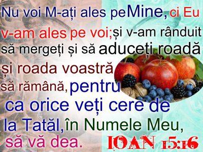 Ioan 15.6